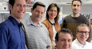 Investigación: La hoja del olivo ayuda a cicatrizar heridas